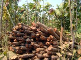 Cutting trees in KKyi